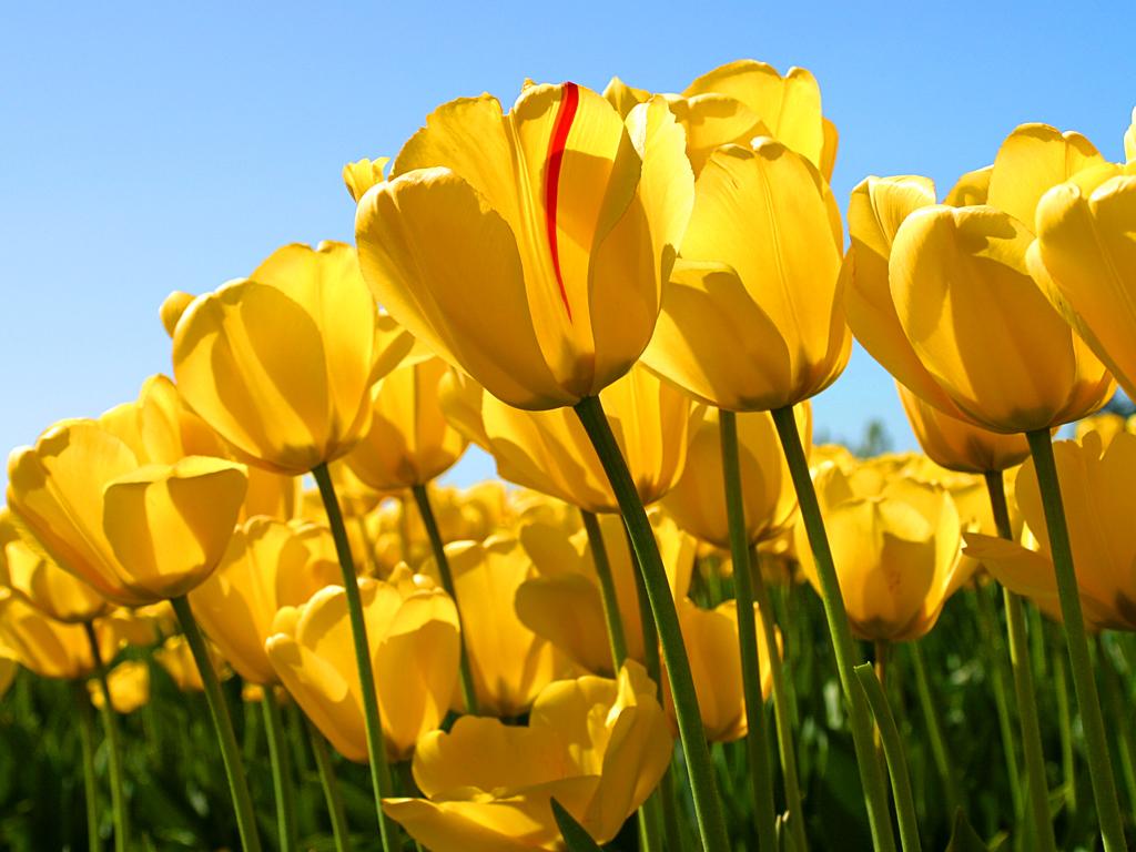 Tips om att jobba med ditt trädgårdsintresse